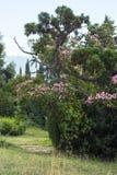 Palacio y parque, Crimea de Livadia Fotos de archivo libres de regalías
