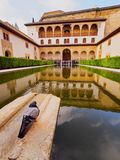 Palacios Nazaries in Granada, Spain. Patio de Arrayanes in Palacios Nazaries of Alhambra in Granada, Andalusia, Spain Stock Images
