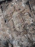 Palaeolithic okänd objektPetroglyph arkivfoton