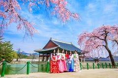 Palais de Gyeongbokgung avec des fleurs de cerisier au printemps Photo stock