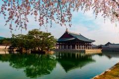 Palais de Gyeongbokgung avec des fleurs de cerisier au printemps images libres de droits