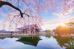 Palais de Gyeongbokgung avec du temps d'arbre de fleurs de cerisier au printemps dedans Photo stock