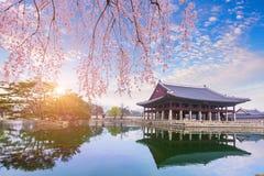Palais de Gyeongbokgung avec du temps d'arbre de fleurs de cerisier au printemps dedans Photographie stock libre de droits