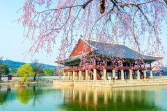Palais de Gyongbokgung avec des fleurs de cerisier au printemps, la Corée Image libre de droits