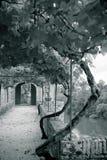 Palais de la Berbie Gardens Alley at Albi, Tarn, France Stock Photo
