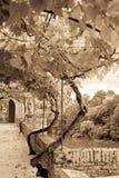 Palais de la Berbie Gardens Alley at Albi, Tarn, France Stock Image