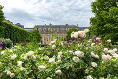 Palais Royal garden in center of Paris, France royalty free stock photos
