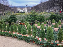 Palais Royal Gardens at Christmastime, Paris, France Stock Image