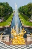 Palais St Petersburg, Russie de Peterhof Abaissez les fontaines grandes de cascade de parc Le palais de Peterhof inclus dans les  Image libre de droits