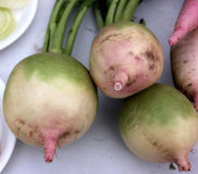 Palam Hriday Radish Royalty Free Stock Photography
