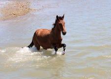 Palamino horse Stock Photography