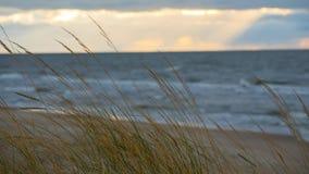 Palanga Baltisch strand in de herfst Royalty-vrije Stock Fotografie