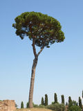 palantine结构树 免版税图库摄影