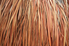 Palapa close up Royalty Free Stock Photography