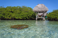 Palapa over the sea and coral. Palapa over the sea between islets of mangrove, and hard coral just under water surface in foreground Royalty Free Stock Image