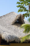 Palapa roof. Tropical Palapa roof over the restaurant royalty free stock photo