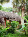 Palapas in jungle. Thatched roof huts surrounded by tropical greenery royalty free stock photography