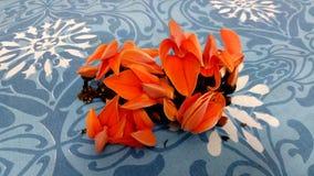 Palas blomma nära vatpara Royaltyfri Bild