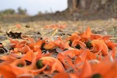 Palas-Blumen lizenzfreies stockfoto