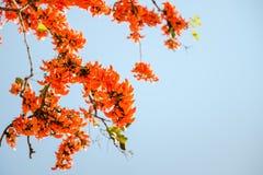 Palas del fiore arancio Immagine Stock Libera da Diritti