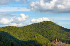 Palatinate Forest Stock Photos