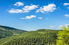 Palatinate Forest Stock Photo