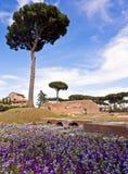 Palatine Heuvel Rome Italië stock foto