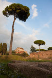 Palatine Hill Stock Photography