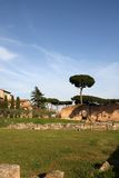 Palatine Hill, Rome, Italy Royalty Free Stock Photo