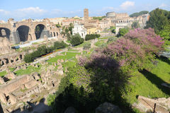 Palatine  in Rome Royalty Free Stock Image