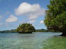 Palau. Micronesia. One of the beautiest places on the world Royalty Free Stock Photography