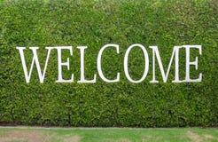 Palavra bem-vinda no fundo da planta verde Fotos de Stock Royalty Free