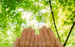 Palavra da mão e do verão no fundo verde da folha Imagem de Stock Royalty Free