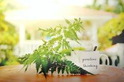 palavras de pensamento positivas escritas na caneca branca na tabela de madeira contra o alargamento da folha e do sol com fundo  fotografia de stock royalty free
