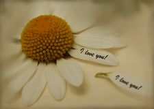 Palavras do amor escritas em uma flor Fotos de Stock Royalty Free