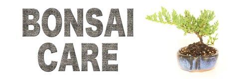 Palavras do cuidado dos bonsais com a árvore crescente nova imagens de stock