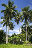 Palawan beach palm trees philippines royalty free stock photo