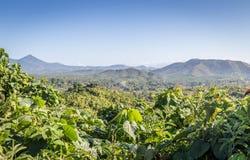 Palawan-Regenwälder Stockfoto