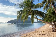 Palawan tropical beach Stock Image