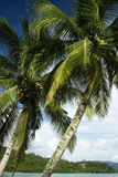 Palawan tropical island palms philippines Royalty Free Stock Image