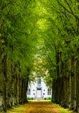 Palazzo all'estremità di un vicolo verde Fotografia Stock Libera da Diritti