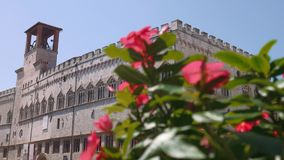 Palazzo dei Priori palace in Perugia behind pink red flowers, focus shift, Italy.  stock video