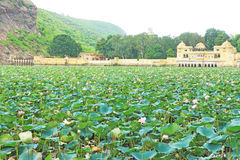Palazzo di galleggiamento di estate su un mare del bundi India dei fiori di loto Fotografia Stock