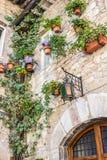 Palazzo di pietra decorato con i vasi da fiori e le piante dello scalatore Immagini Stock