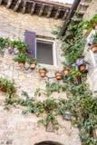 Palazzo di pietra decorato con i vasi da fiori e le piante dello scalatore Fotografia Stock Libera da Diritti