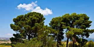 Palazzolo alte Bäume stockbild