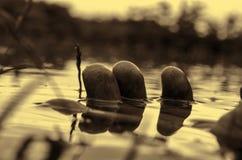 Palców dotyków wody zakończenie up lub tonięcie mężczyzna pojęcie Ręka zamknięta up w wodzie Selekcyjna ostrość Zdjęcia Royalty Free