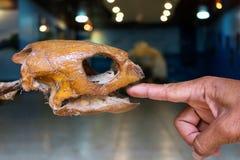 Palce mężczyzna i kości denni żółwie Obrazy Stock