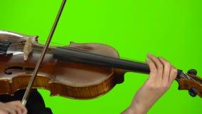 Palce muzyk zaciskają sznurki na drewnianym skrzypce zielony ekran z bliska zdjęcie wideo