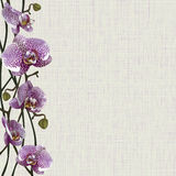 Pale background with purple orchid flowers, stems and buds Stock Photos
